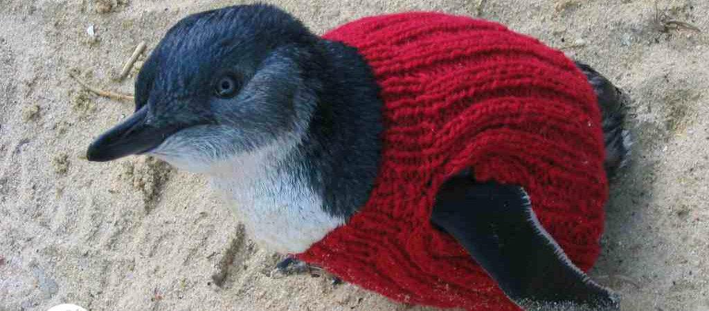 Penguin-red-jumper-lr-logo2.jpg